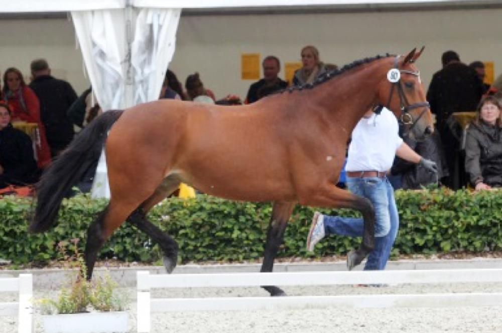 Die Pferdezucht