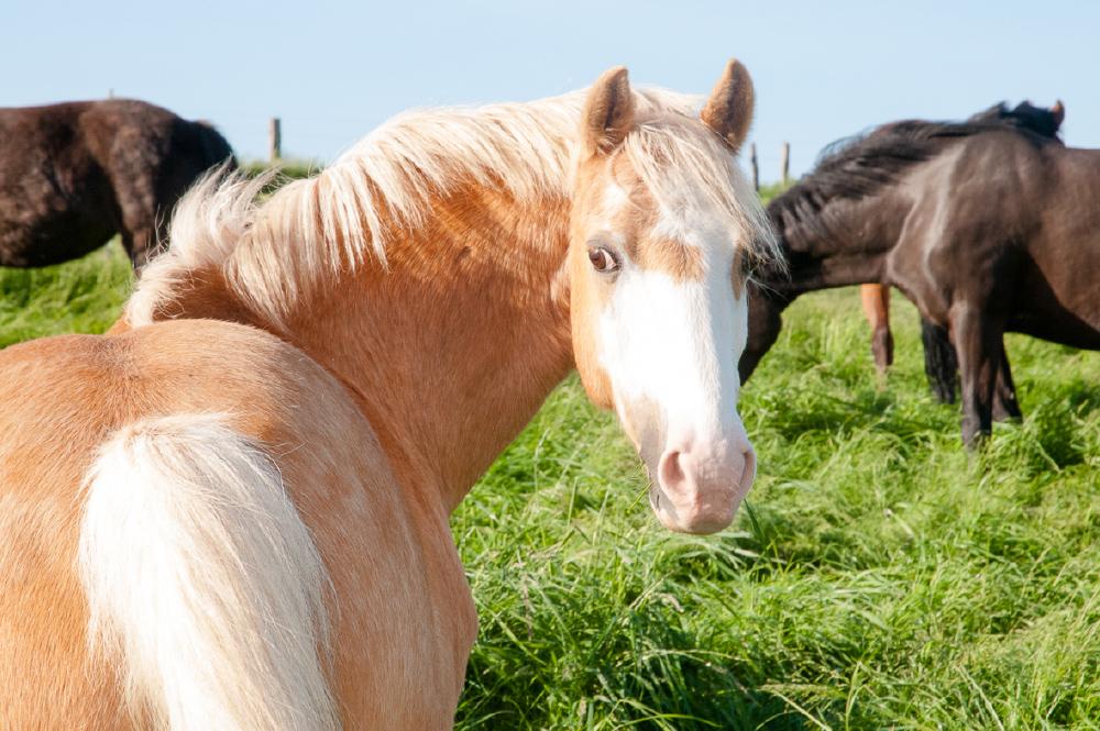 Unsere Pferde & Ponies