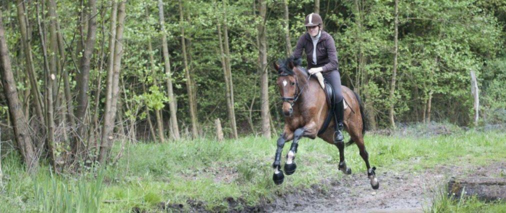 Preise Reiturlaub – Reiten mit eigenem Pferd